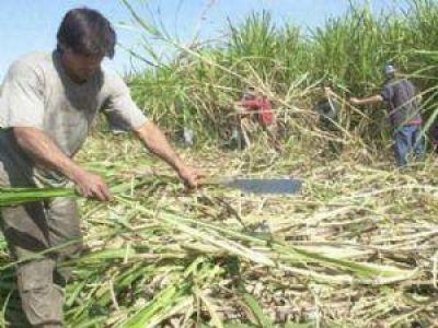 Intentan frenar el paro de trabajadores azucareros