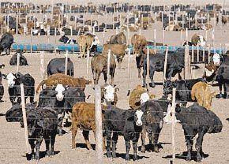 El Estado destina $ 7 millones al día para el engorde de vacas