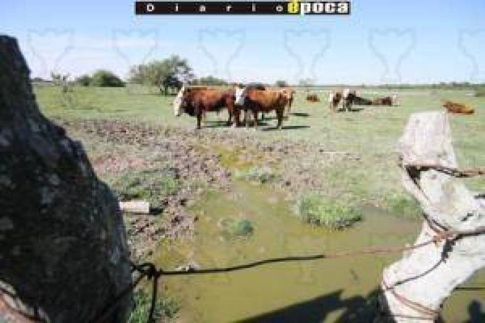 Sin lluvias, ganaderos sólo hallan agua a 30 metros de profundidad