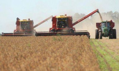 Cosecha gruesa: se perdieron u$s 500 millones en la provincia por el clima