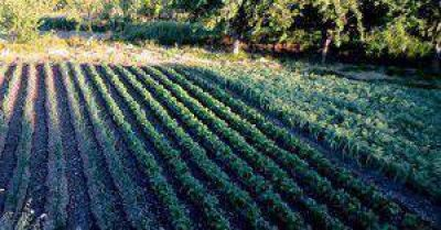 FAO promueve transitar hacia una agricultura climáticamente inteligente
