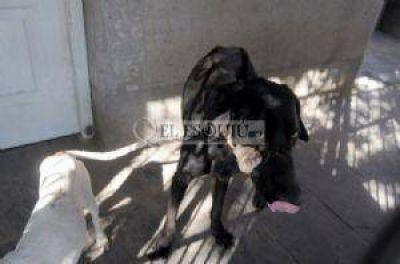 Otra denuncia penal para vecino que hirió al perro