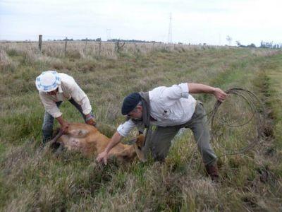 Intensos operativos y patrullajes de fauna, protegiendo las especies silvestres de la Provincia