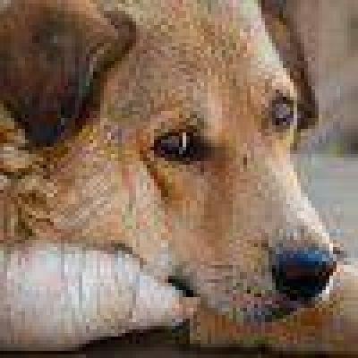 Incrementarán las sanciones por maltrato animal