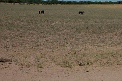 Declaran la emergencia agropecuaria por sequía