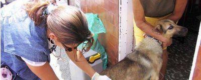 Por prevención de rabia se enviaron 50 mil vacunas a Bolivia