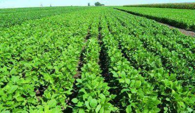 2014: �cae el negocio de la soja?
