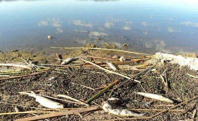 Niegan contaminación de la Laguna: