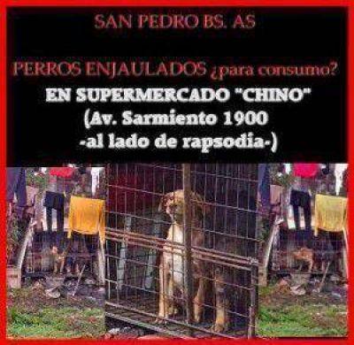 "San Pedro: Rescatan perros enjaulados en un Supermercado ""chino""."
