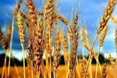 Gu�a: �La rentabilidad para peque�os y medianos productores, es nula�