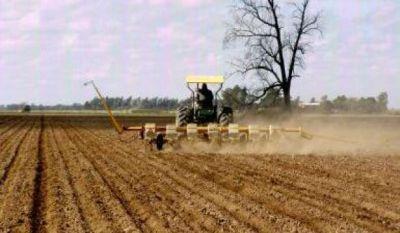 El gobierno asistirá a productores chaqueños en la siembra de girasol