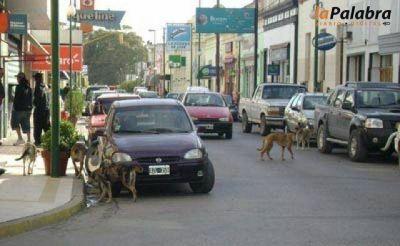Proyectan la refuncionalización de la calle Comodoro Rivadavia Sería, en principio, entre las calles 7 de Marzo y España