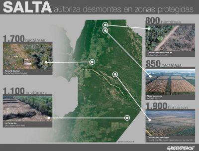 En solo dos meses arrasaron en Salta con miles de hectáreas de bosques protegidos