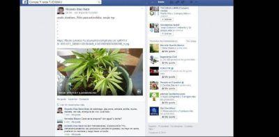Tucumano intenta vender plantines de marihuana por facebook