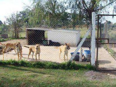Durante el primer semestre del año fueron castradas más de 1.000 mascotas en el Partido