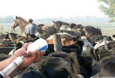 Departamentos del interior provincial disminuyeron un 8% su stock ganadero