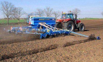 Se sembró más trigo en la provincia de Córdoba que en la campaña anterior