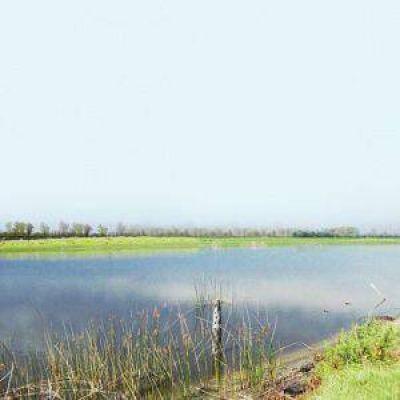 La emergencia hídrica pone en jaque la producción lechera