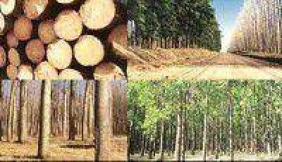 Buscan fortalecer la producci�n foresto-industrial
