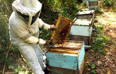 Hace dos años que Corrientes no exporta miel