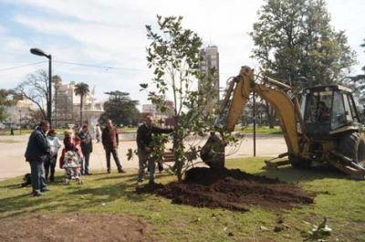 Reforestan la plaza 25 de Mayo para reponer los árboles caídos durante el tornado
