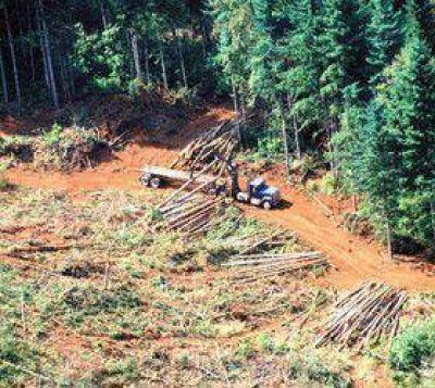 Convicciones deforestadoras fuertes
