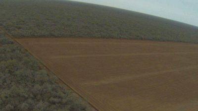 Se desmontaron 112.000 hectáreas protegidas Ley de Bosques