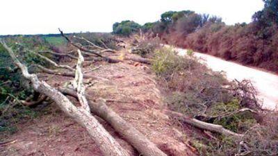 El Consejo Federal de Ambiente pidió que Salta responda por los desmontes