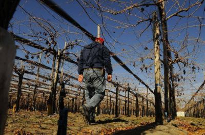 Cooperativas vitivinícolas piden estirar pago de créditos
