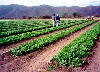 Distribuirán información sobre el ciclo de cultivo del tabaco