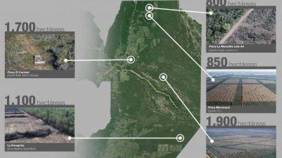 Piden a Nación instrumentar las medidas para que Salta cumpla con la Ley de Bosques