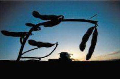 Abuso de Monsanto con la venta de semillas