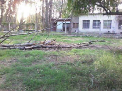 """Caso Daiana: """"las partes del árbol están secuestradas"""""""