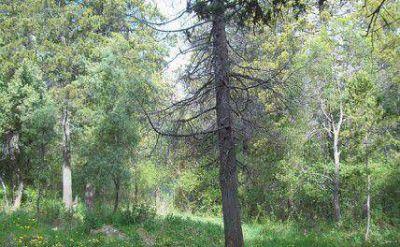 Juntaron 10 mil firmas para proteger bosque en el oeste