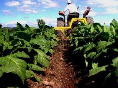 Pinedo aseguró que el PRO no apoyará la suba de impuestos al tabaco