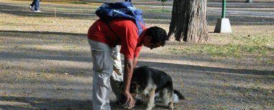 Trasladarán a perros abandonados en las plazas