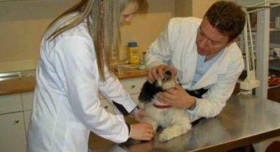 Vacunación y castración de mascotas en La Nueva Formosa