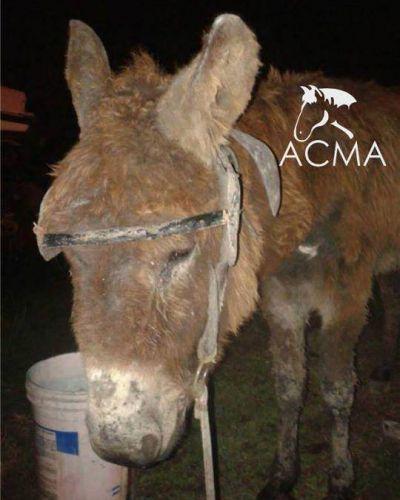 Policías salvaron a un burro de un maltrato letal