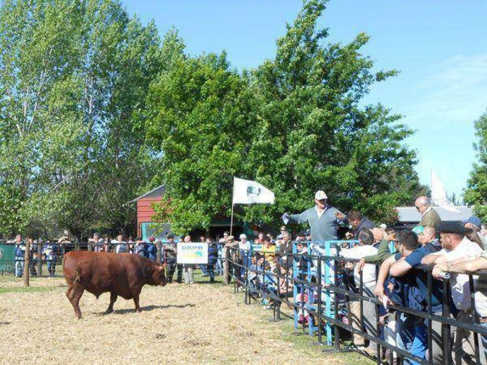 El toro mejor cotizado se vendió en $33 mil
