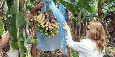 """Diputada pidió """"terminar con la desprotección de los bananeros"""""""