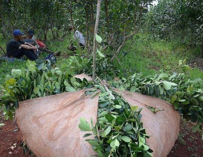 Se prorrog� hasta el 31 de octubre la sesi�n de precios de la yerba mate