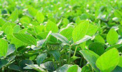 Prev�n nuevo r�cord de siembra de soja