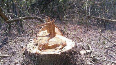 Después de 4 días la Policía fue a verificar un robo de madera