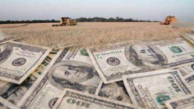 Aparecen los d�lares de la soja: exportadores liquidar�n u$s 5.700 millones hasta fin de a�o