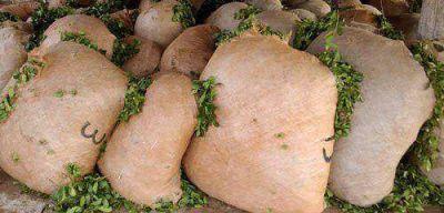Diputados aprobó envasado en origen para la yerba y una modificación de la ley del INYM