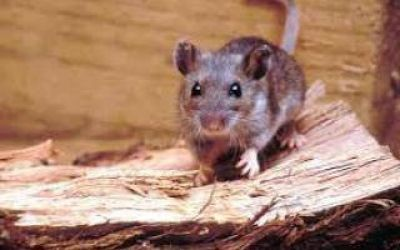 Chascomús: Confirmaron un caso fatal de hantavirus