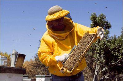 Las fuertes lluvias afectan la producción apícola misionera