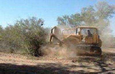 Entre 2011 y 2013 Salta fue la que m�s bosques nativos perdi�