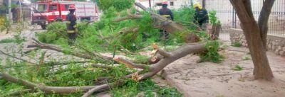 El fuerte viento provocó destrozos en la capital