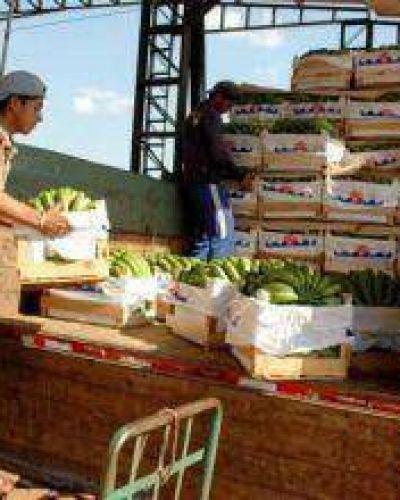 Lanzan desde el Gobierno semana de comercialización de banana formoseña